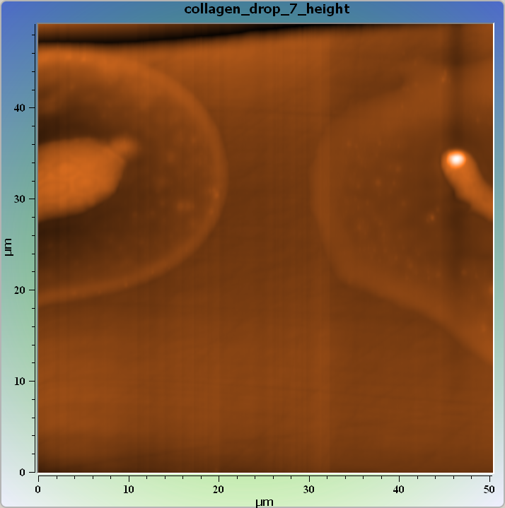Collagen drops on surfase. AFM image. Topography.
