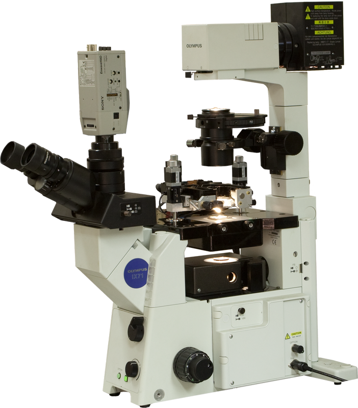 Certus Optic (AFM) with Olympus IX71